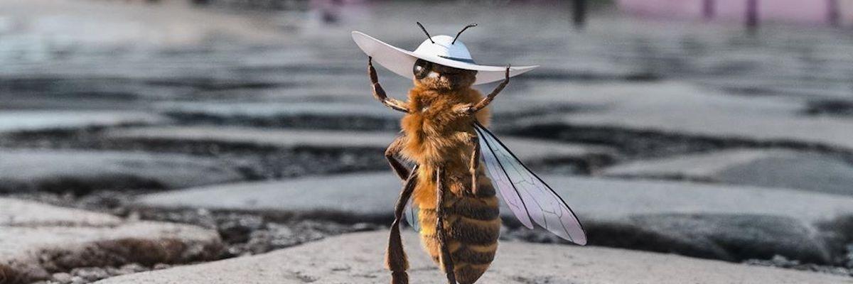 세계 최초의 '꿀벌 인플루언서' 탄생!